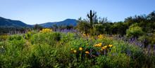 Arizona Wildflowers 2019