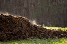 A Pile Of Manure On An Agricultural Field For Growing Bio Products