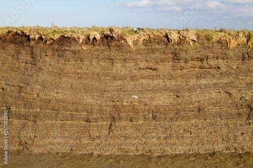 Tidal marsh soil profile in the cutbank of a creek, the result of accretion and Wallpaper Mural