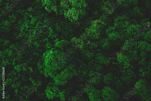 Papiers peints Forets Atmospheric natural Moss Background Texture