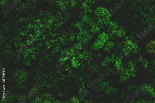 Fotobehang Bossen Atmospheric Moss Background Texture