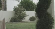 4K Palm Trees Hedges Cypress T...