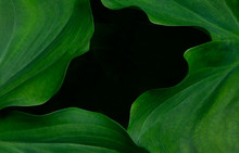 Four Leafy Fronds Of Deep Rich Green Palm Plant Form A Black Window Into The Unknown
