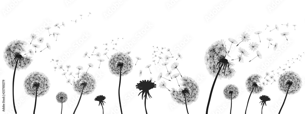Fototapety, obrazy: Abstract black dandelion, dandelion with flying seeds illustration - for stock