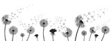Fototapeta Fototapeta z dmuchawcami - Abstract black dandelion, dandelion with flying seeds illustration - for stock