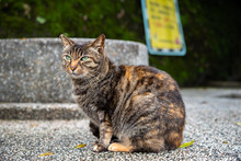 Cute Cat At Houtong Cat Villag...