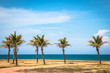 Beach with palm Brazil