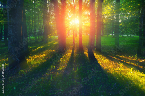 Cadres-photo bureau Route dans la forêt Forest summer landscape - forest trees with grass on the foreground and sunlight shining through the trees