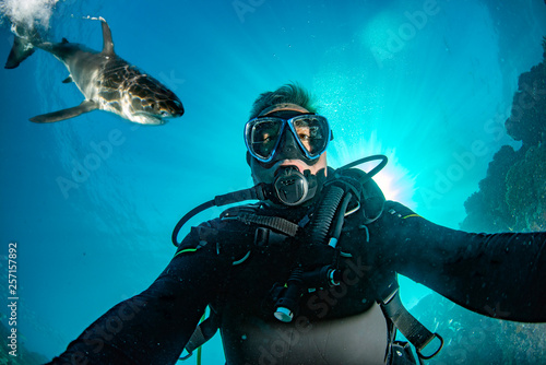 Underwater selfie with great white shark ready to attack Fototapet