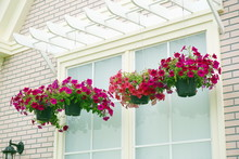 Hanging Basket Of Flowers In F...