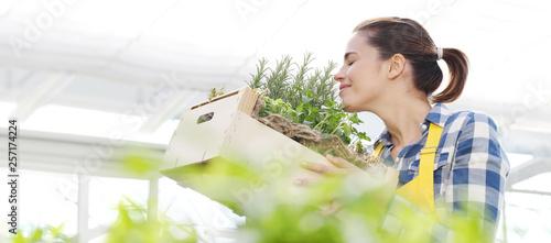 Fototapeta smiling woman smell aromatic spice herbs on white background, spring garden concept obraz