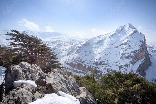 Fotografía Tannourine ancient cedar forest and Mount Lebanon