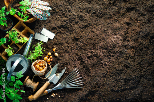 Aluminium Prints Garden Gardening tools and seedlings on soil