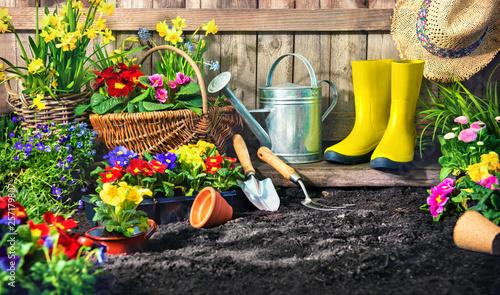 Foto auf Leinwand Indien Planting flowers in sunny garden.
