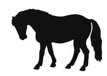 Vector Sketch Of A Pony Exteri...