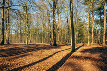 Bare Trees In A Sunny Forest