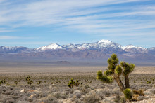 A Nevada Desert Landscape With A Joshua Tree In The Foreground And Snowcapped Mountains In The Distance