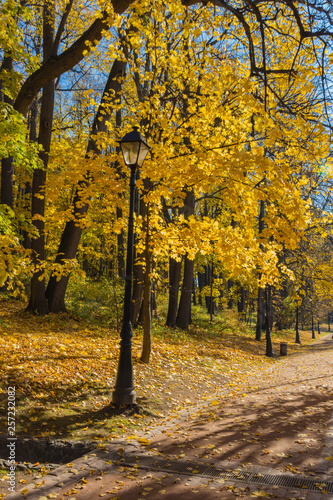 Yellow maple trees and lantern in the park © topolov_nick