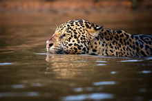 Water Hunter