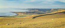 Grazing Sheep On Coastal Hills...