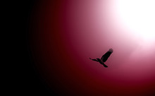 Flying Bird On Gradient Color Background