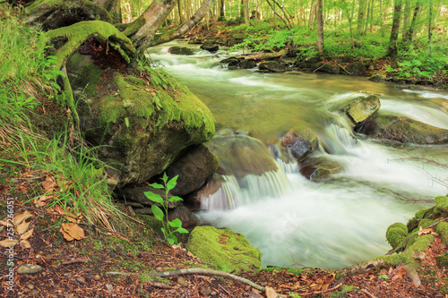 Bank Of The Forest River Beautiful Summer Nature Scenery