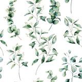 Akwarela inny wzór eukaliptusa. Ręcznie malowane gałęzi eukaliptusa i liście na białym tle. Kwiatowa ilustracja do projektowania, drukowania, tkaniny lub tła. - 257280417