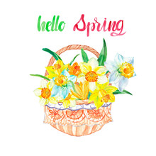 Watercolor Spring Daffodil Flowers In A Basket. Yellow Floral Decorative Bouquet For Easter Cards, Mother's Day, Invitations, Textile, Scrapbooking. Symbols Od New Season And Spring Holidays.