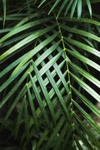 Green Thin Palm Leaves Plant G...