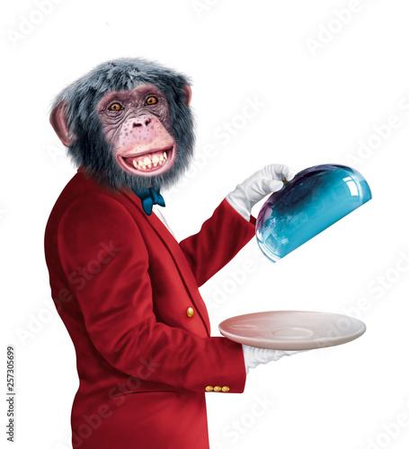 Fotomural chimpanzé, serveur, chef , veste rouge,  cook, aliment, isolé, maitre d'hôtel, c