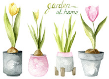 Watercolor Hand Drawn Set Of Plants. Garden At Home