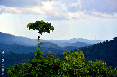 La pose en embrasure Arbre Scenic view of primary rain forest in lowland Danum Valley, Sabah Borneo, Malaysia. One of the few primary rainforest around the globe.