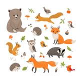 Fototapeta Fototapety na ścianę do pokoju dziecięcego - Cute little woodland wild animals and birds