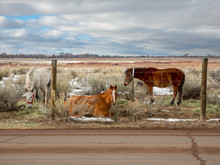 Horses At Rest, New Mexico