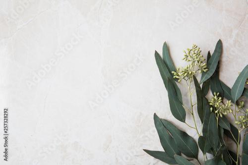 Eucalyptus On Marble Wallpaper Mural