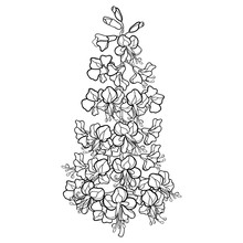 Outline Buckeye Or Horse Chestnut Or Aesculus Flower Bunch In Black Isolated On White Background.