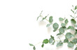 canvas print picture - Eucalyptus leaves on white background. Flat lay, top view, copy space