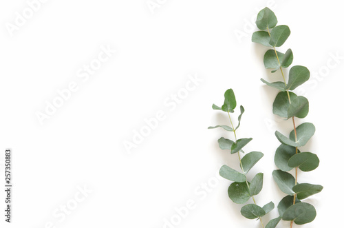 Papiers peints Vegetal Eucalyptus leaves on white background. Flat lay, top view, copy space