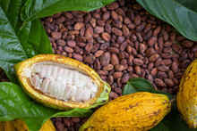 Ripe Cocoa Pod And Beans Setup On Rustic Wooden Background