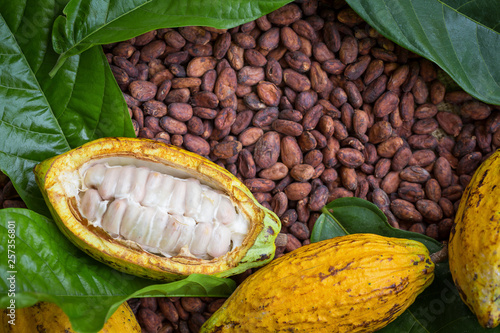 Stampa su Tela Ripe cocoa pod and beans setup on rustic wooden background