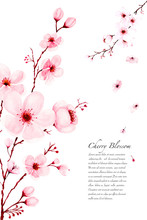 Template Watercolor Sakura Branches Hand Painted On White Background.