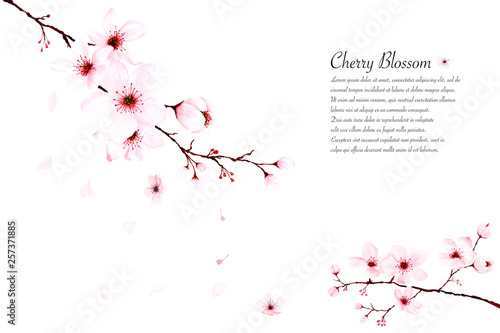 Template watercolor cherry blossom branches hand painted on white background Fototapete