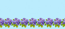 Strip Of Lilac Pansies Painted With Watercolor.