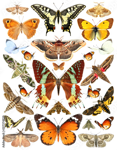 Fotografie, Obraz  Butterflies and moths. Isolated on a white background