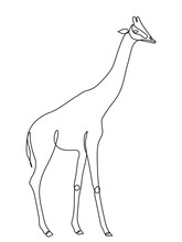 Giraffe Continuous Line Drawing