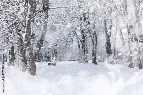 Fototapeta Winter landscape. Forest under the snow. Winter in the park. obraz na płótnie