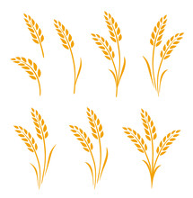 Hand Drawn Set Of Golden Wheat...
