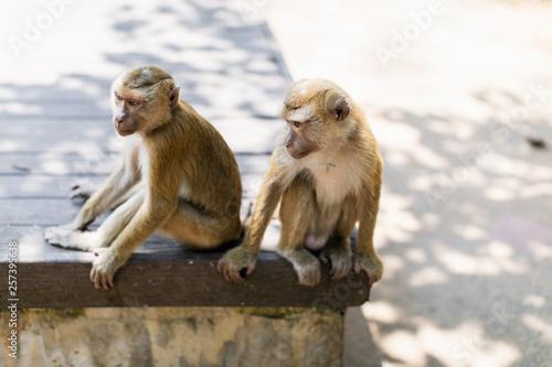 Garden Poster Parrot monkey hill Thailand