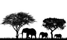 Realistic Illustration Of Landscape With Trees In African Safari. A Family Of Three Elephants With A Baby Go In The Grass, Vector