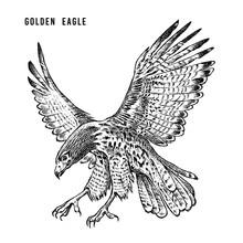 Golden Eagle. Wild Forest Bird...